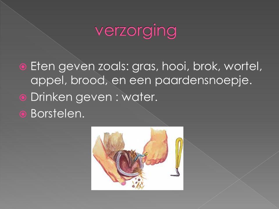 verzorging Eten geven zoals: gras, hooi, brok, wortel, appel, brood, en een paardensnoepje. Drinken geven : water.