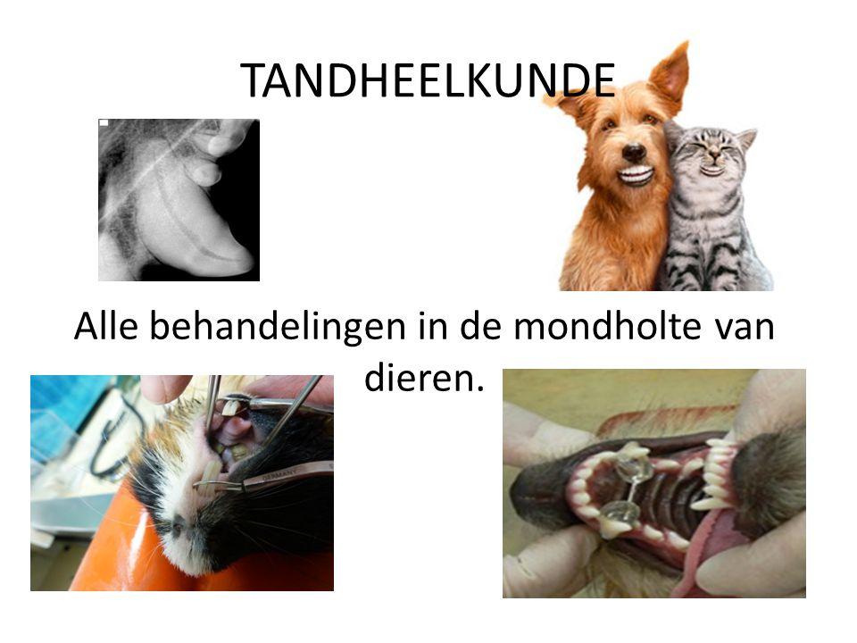 Alle behandelingen in de mondholte van dieren.