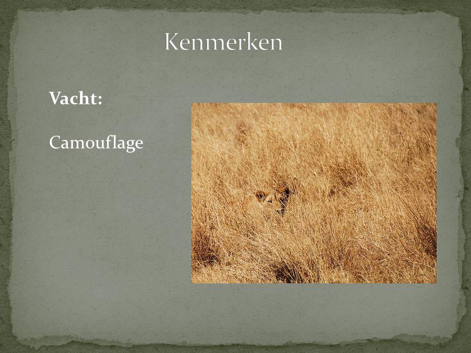 Kenmerken Vacht: Camouflage