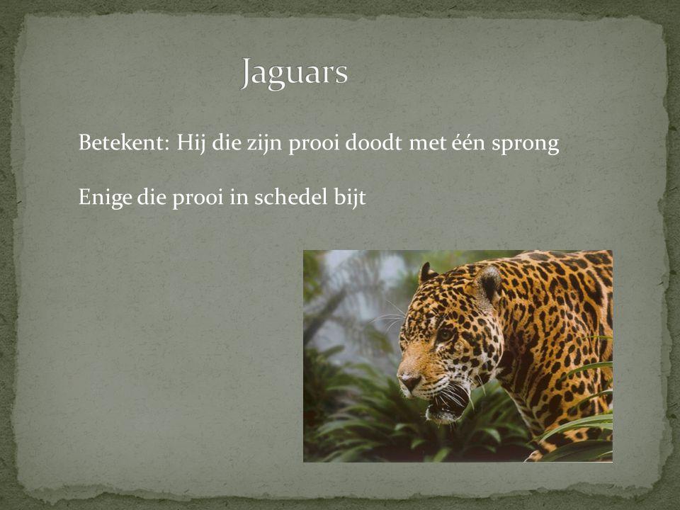 Jaguars Betekent: Hij die zijn prooi doodt met één sprong