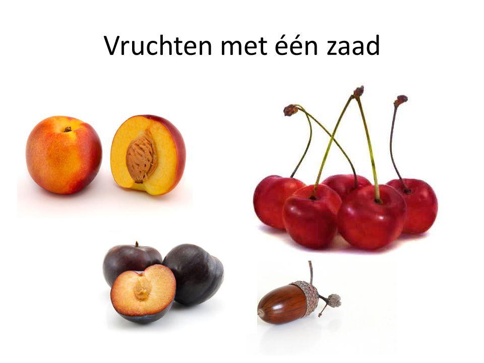 Vruchten met één zaad Perzik, Kers, Pruim, Eikel