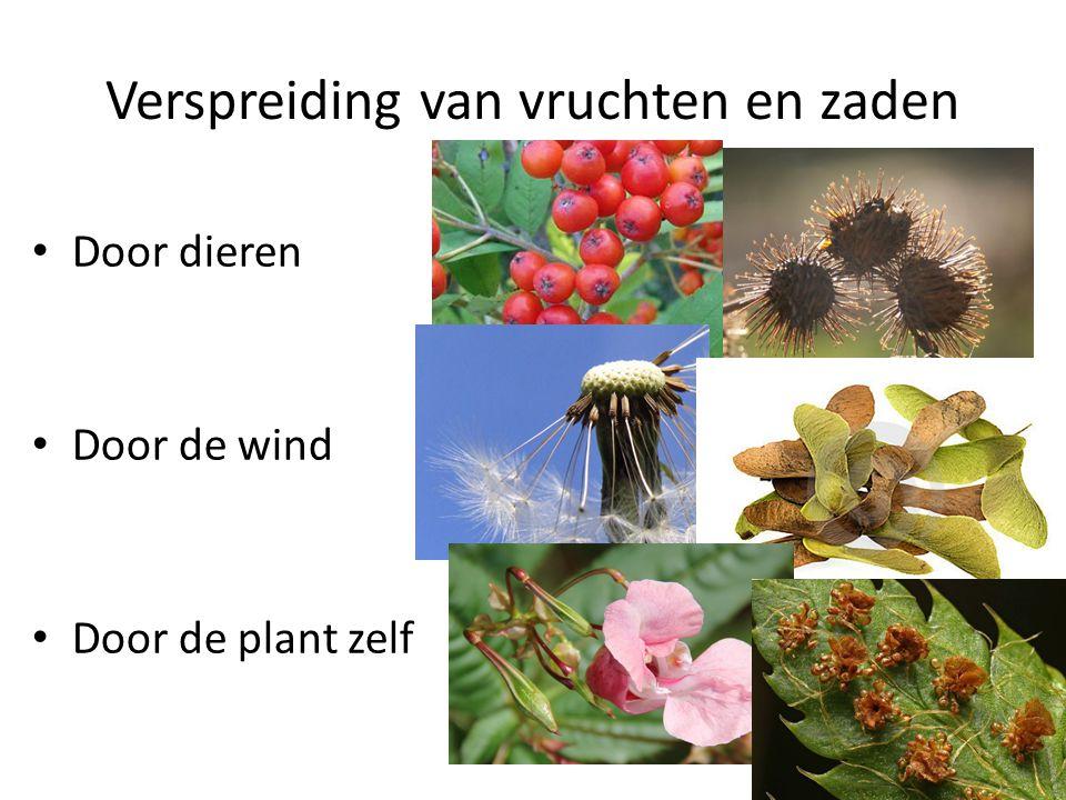 Verspreiding van vruchten en zaden