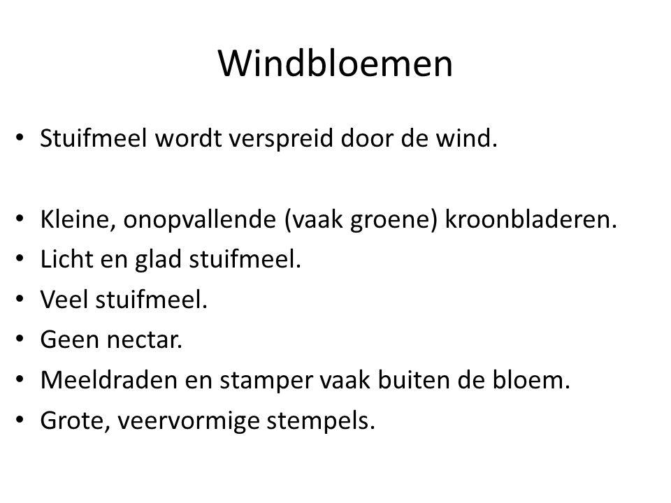Windbloemen Stuifmeel wordt verspreid door de wind.