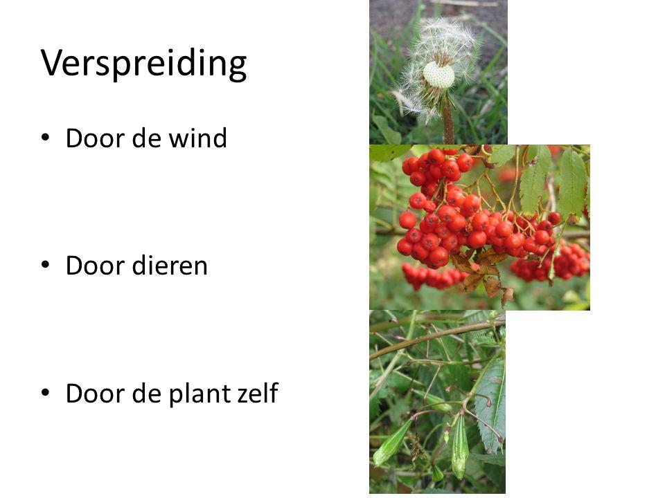 Verspreiding Door de wind Door dieren Door de plant zelf