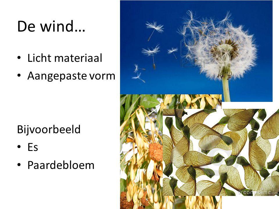 De wind… Licht materiaal Aangepaste vorm Bijvoorbeeld Es Paardebloem