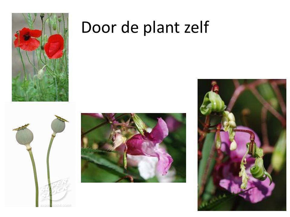 Door de plant zelf