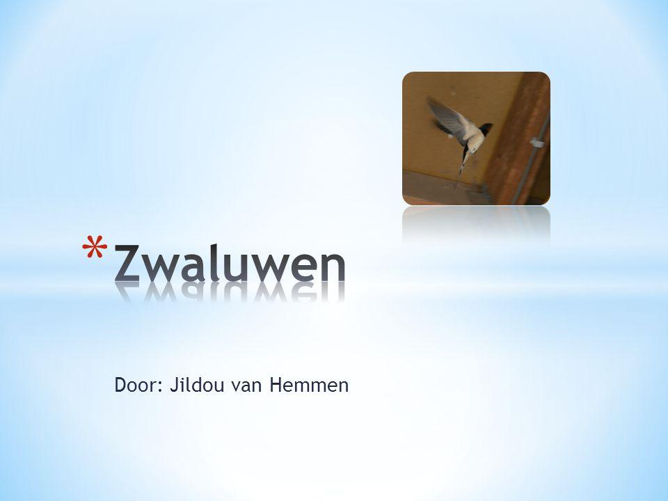 Door: Jildou van Hemmen