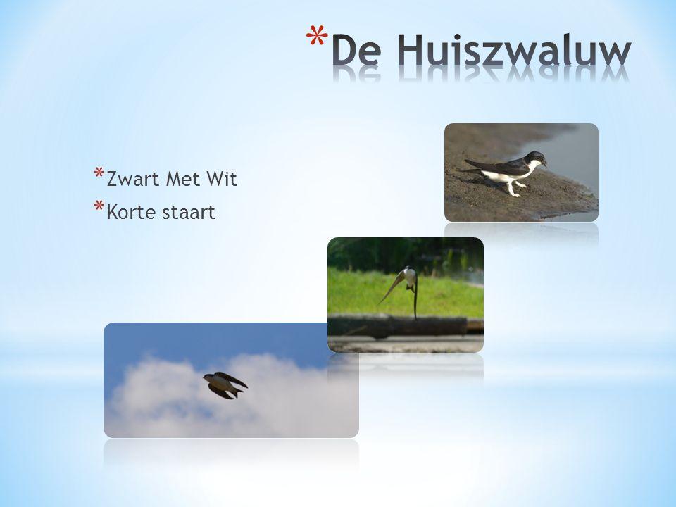 De Huiszwaluw Zwart Met Wit Korte staart DE HUISZWALUW