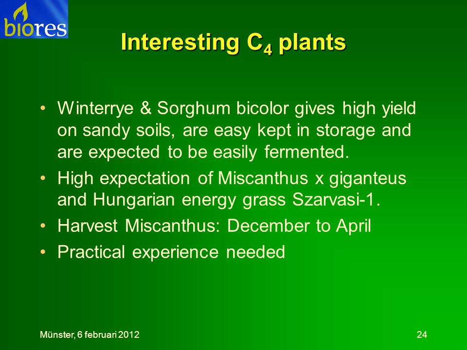Interesting C4 plants Winterrye & Sorghum bicolor gives high yield on sandy soils, are easy kept in storage and are expected to be easily fermented.