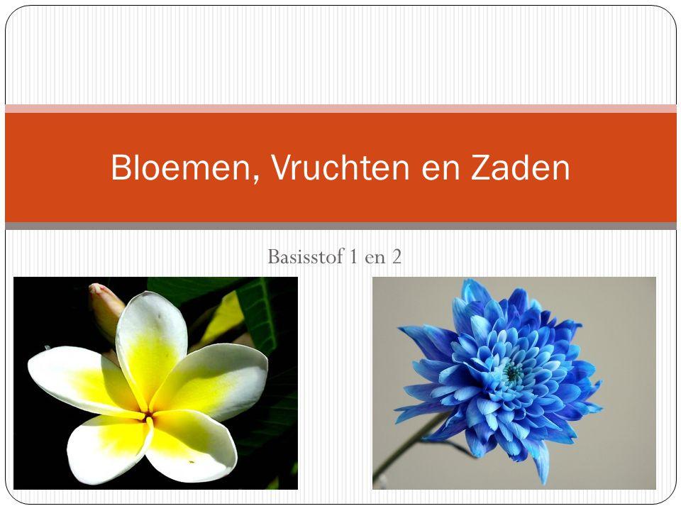 Bloemen, Vruchten en Zaden