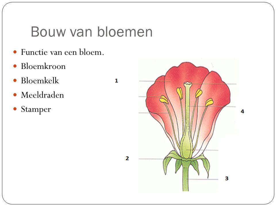 Bouw van bloemen Functie van een bloem. Bloemkroon Bloemkelk