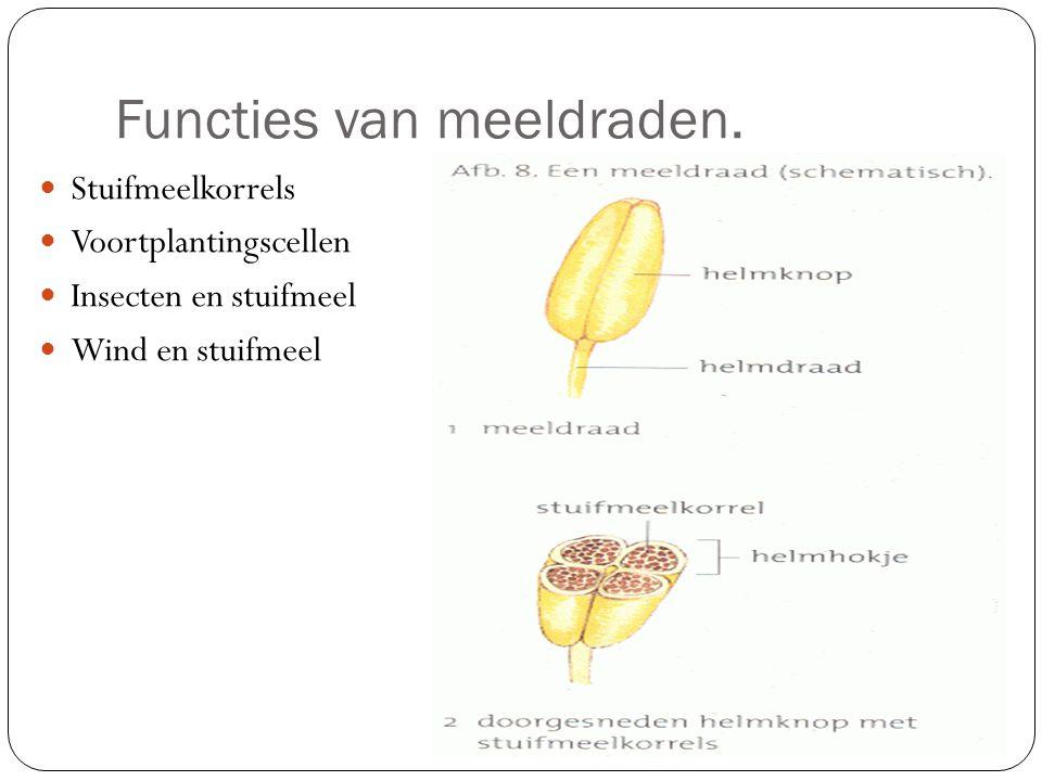 Functies van meeldraden.