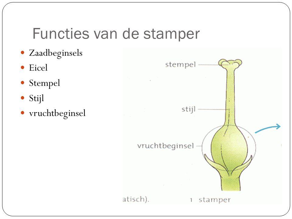 Functies van de stamper