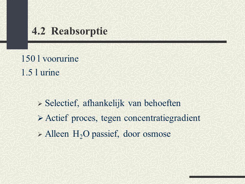 4.2 Reabsorptie 150 l voorurine 1.5 l urine