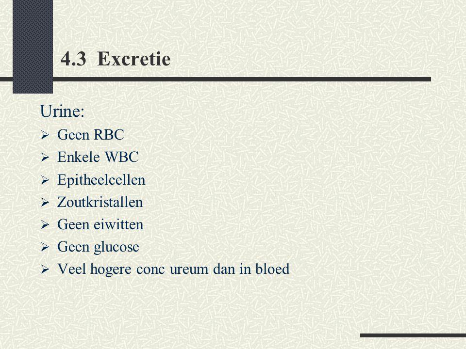 4.3 Excretie Urine: Geen RBC Enkele WBC Epitheelcellen Zoutkristallen