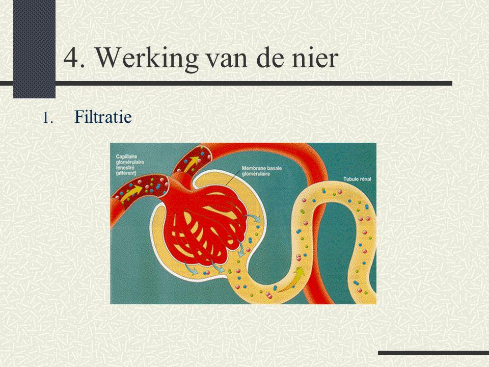 4. Werking van de nier Filtratie