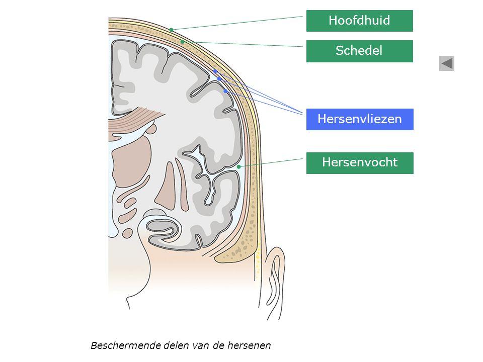 Hoofdhuid Schedel Hersenvliezen Hersenvocht