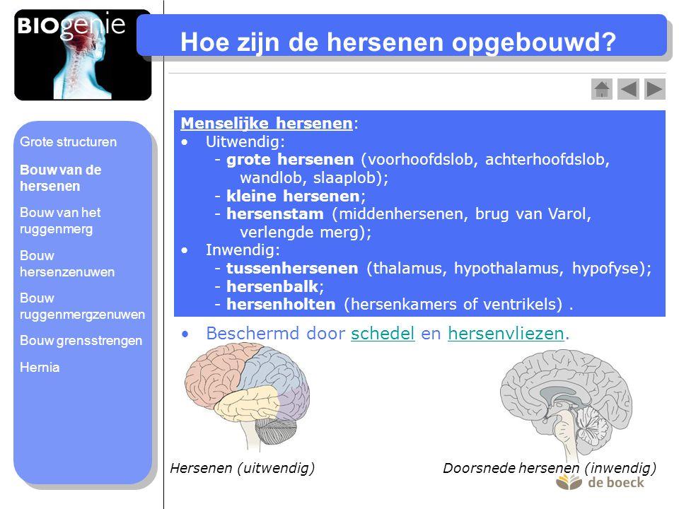 Hoe zijn de hersenen opgebouwd