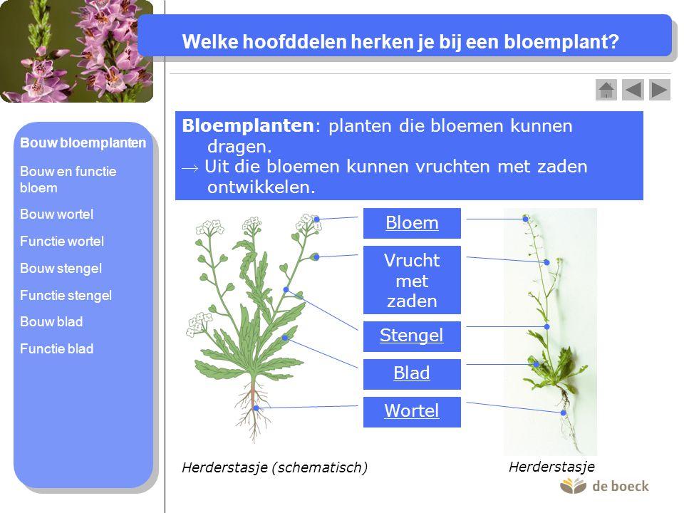 Welke hoofddelen herken je bij een bloemplant