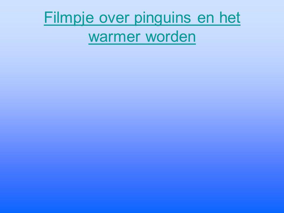 Filmpje over pinguins en het warmer worden