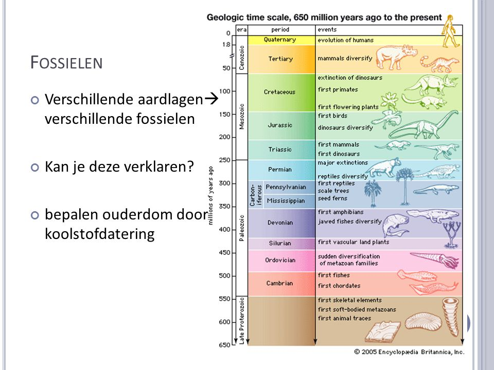 Fossielen Verschillende aardlagen verschillende fossielen