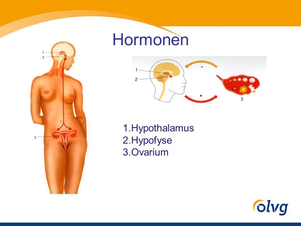 Hormonen 1.Hypothalamus 2.Hypofyse 3.Ovarium