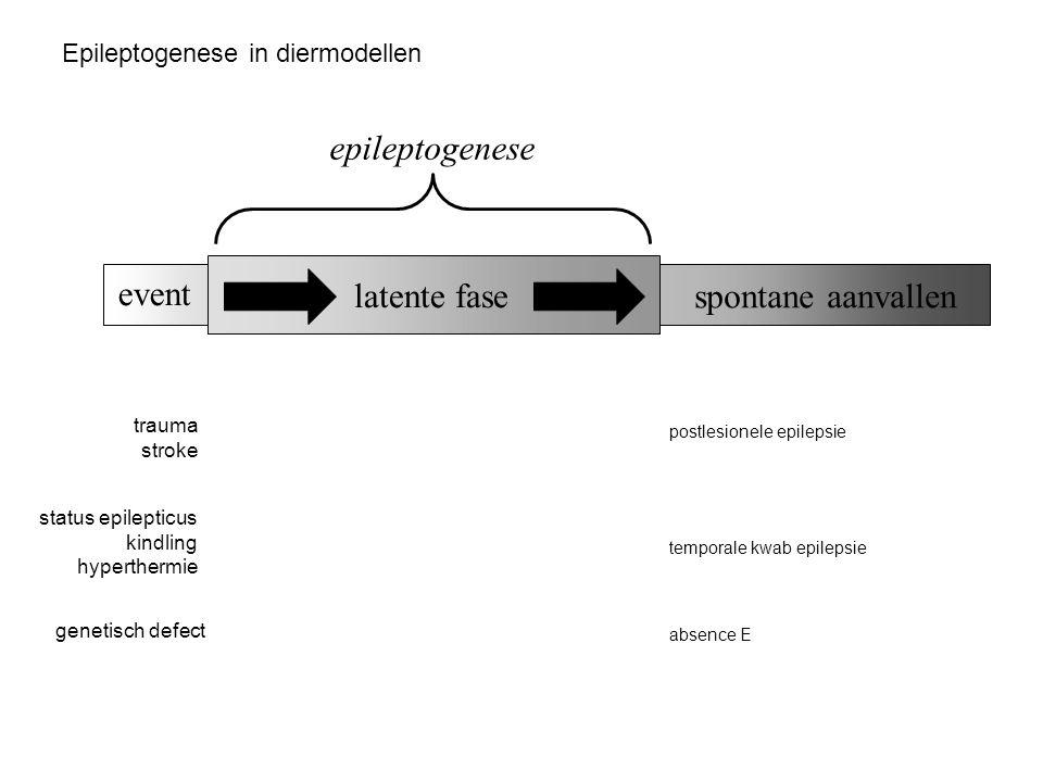epileptogenese event latente fase spontane aanvallen
