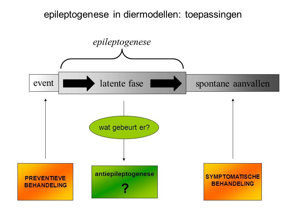 epileptogenese in diermodellen: toepassingen epileptogenese event