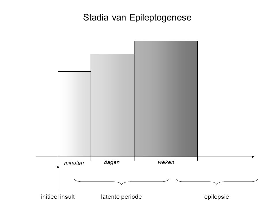 Stadia van Epileptogenese