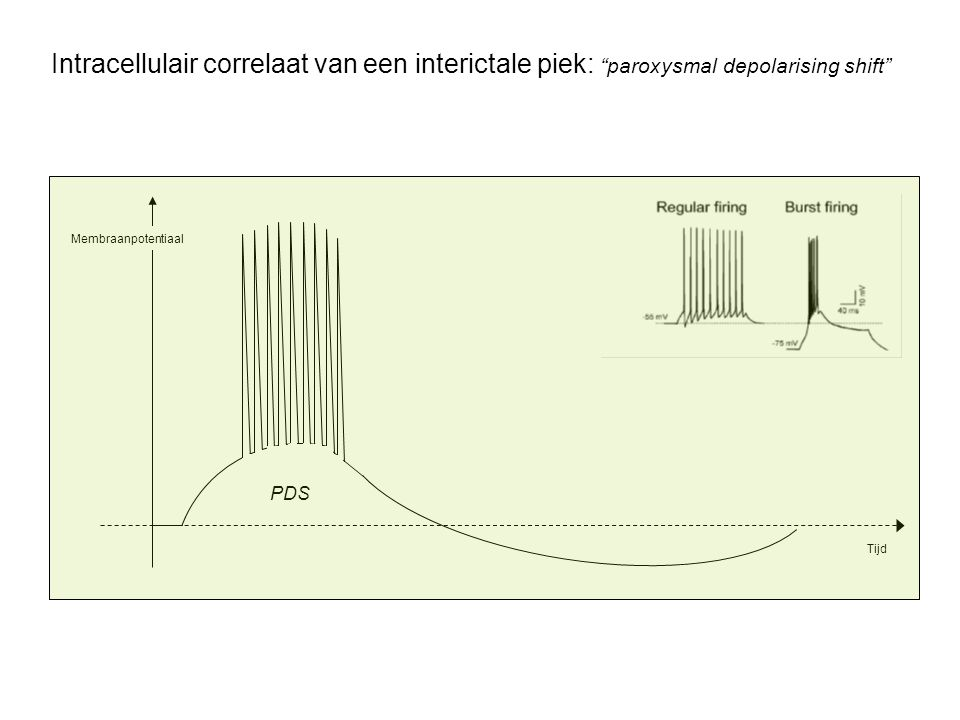 Intracellulair correlaat van een interictale piek: paroxysmal depolarising shift