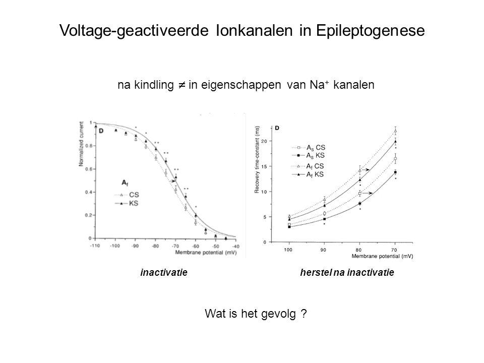 Voltage-geactiveerde Ionkanalen in Epileptogenese