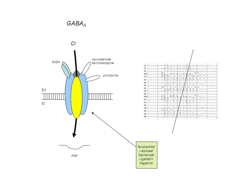 GABAA Cl- EC IC fenobarbital valproaat topiramaat vigabatrin tiagabine