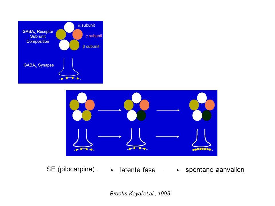 SE (pilocarpine) latente fase spontane aanvallen