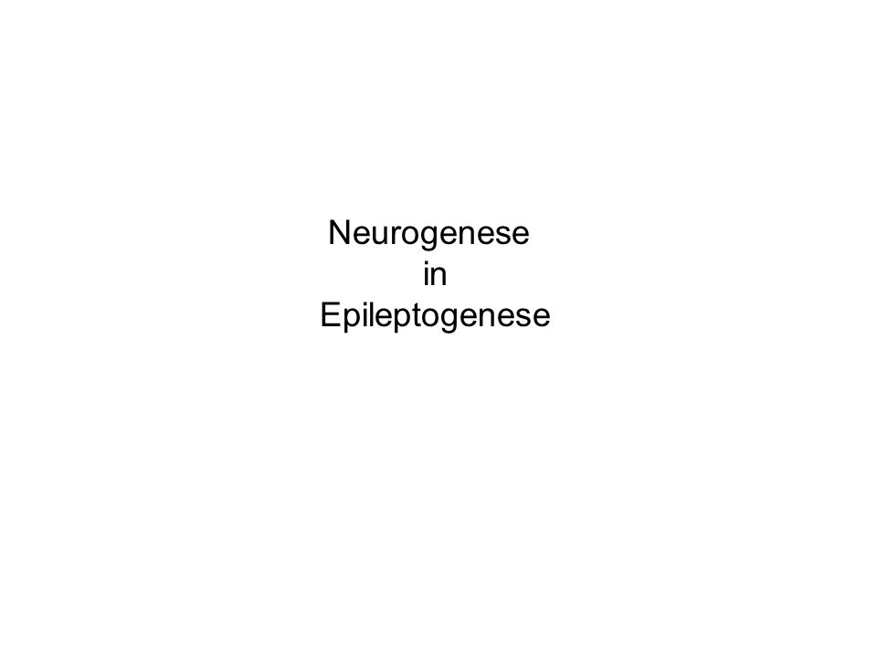 Neurogenese in Epileptogenese