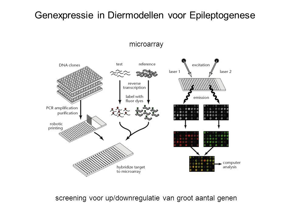 Genexpressie in Diermodellen voor Epileptogenese