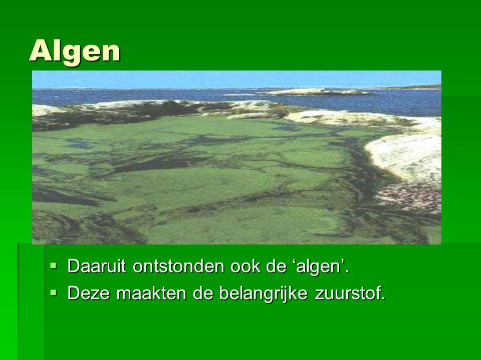 Algen Daaruit ontstonden ook de 'algen'.