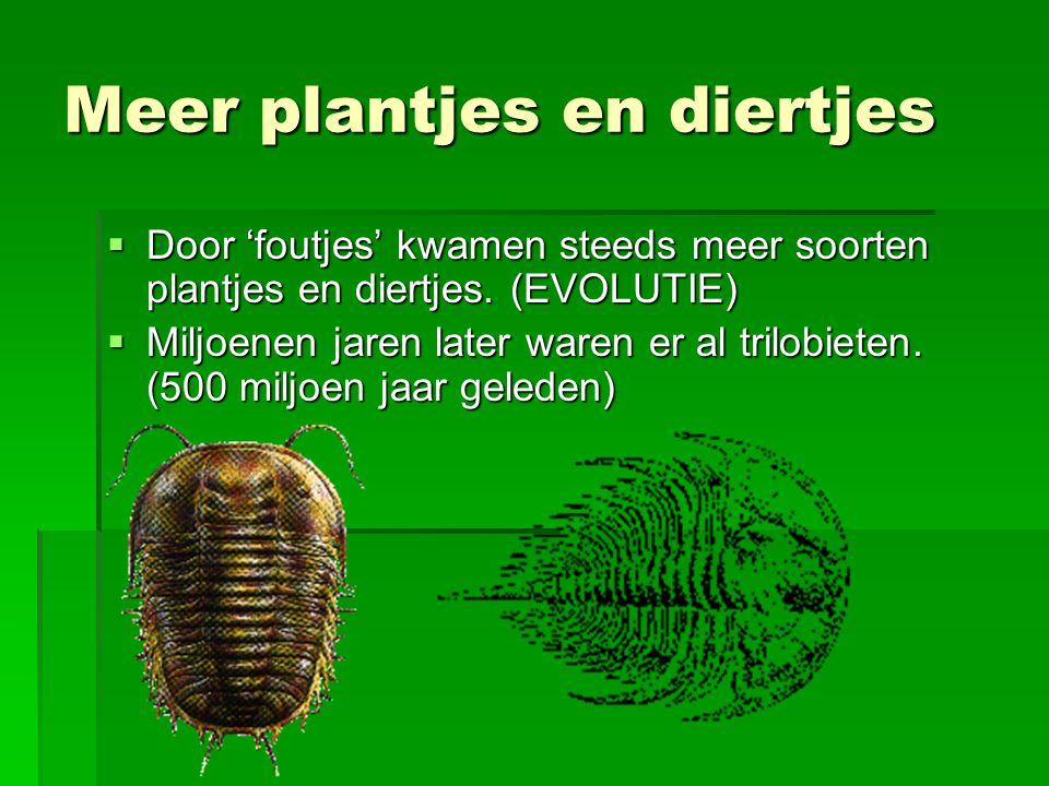 Meer plantjes en diertjes