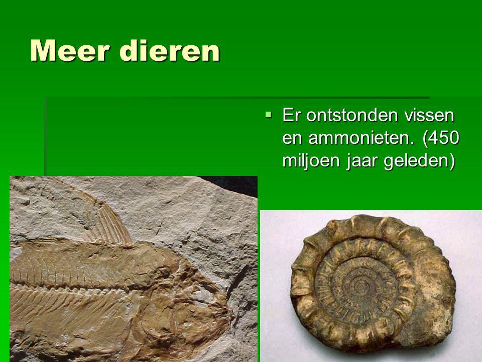Meer dieren Er ontstonden vissen en ammonieten. (450 miljoen jaar geleden)