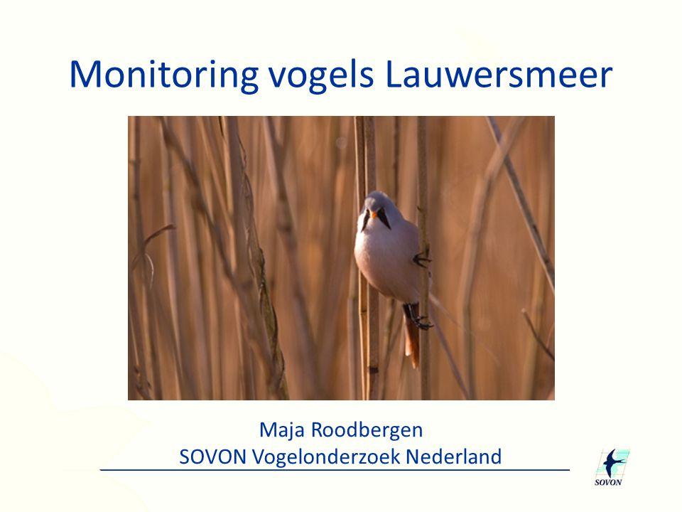 Monitoring vogels Lauwersmeer
