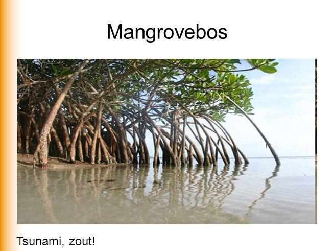 Mangrovebos Tsunami, zout!
