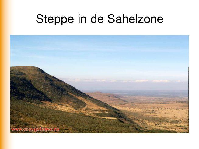 Steppe in de Sahelzone