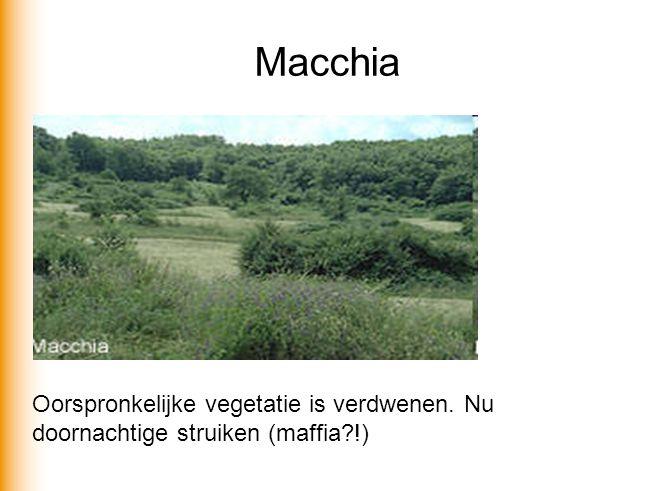 Macchia Oorspronkelijke vegetatie is verdwenen. Nu doornachtige struiken (maffia !)