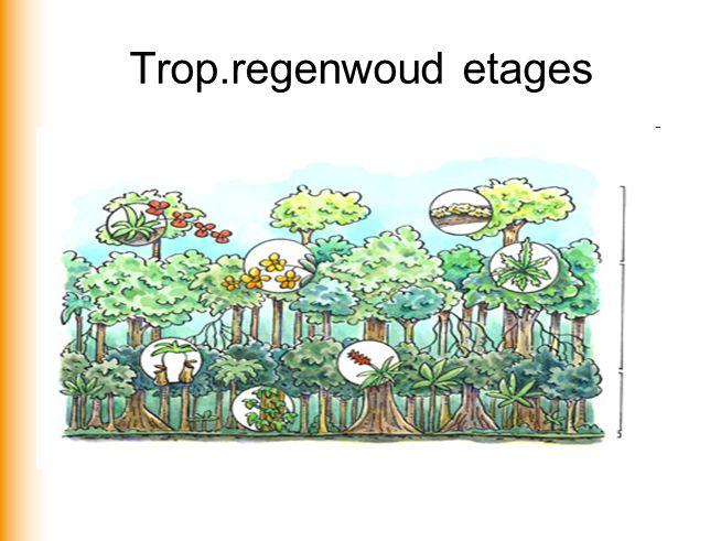Trop.regenwoud etages