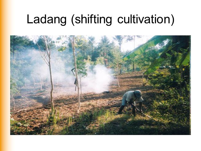Ladang (shifting cultivation)
