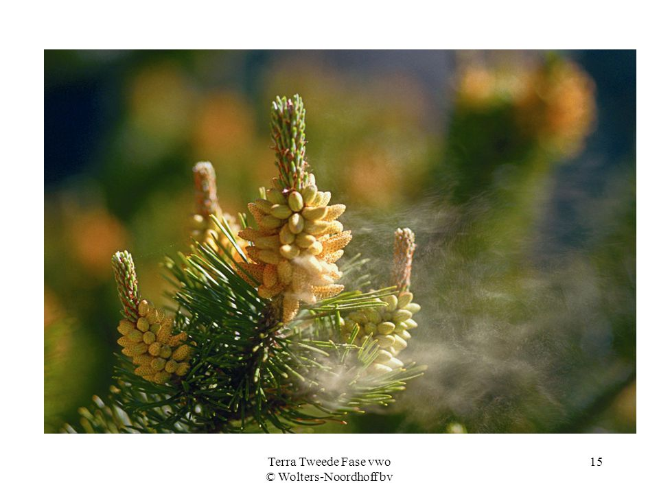Terra Tweede Fase vwo © Wolters-Noordhoff bv