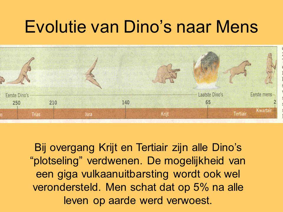 Evolutie van Dino's naar Mens