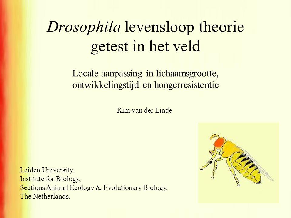 Drosophila levensloop theorie getest in het veld