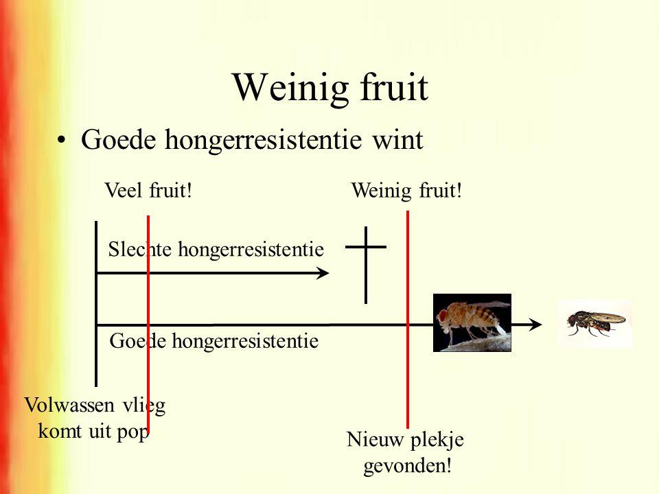 Weinig fruit Goede hongerresistentie wint Veel fruit! Weinig fruit!