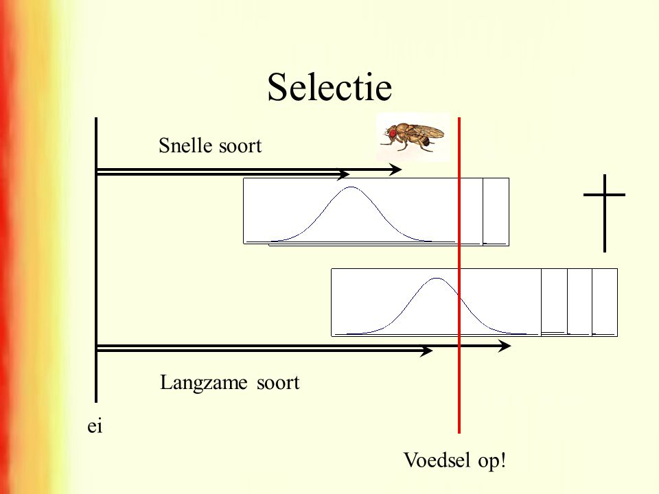 Selectie Snelle soort Langzame soort ei Voedsel op!