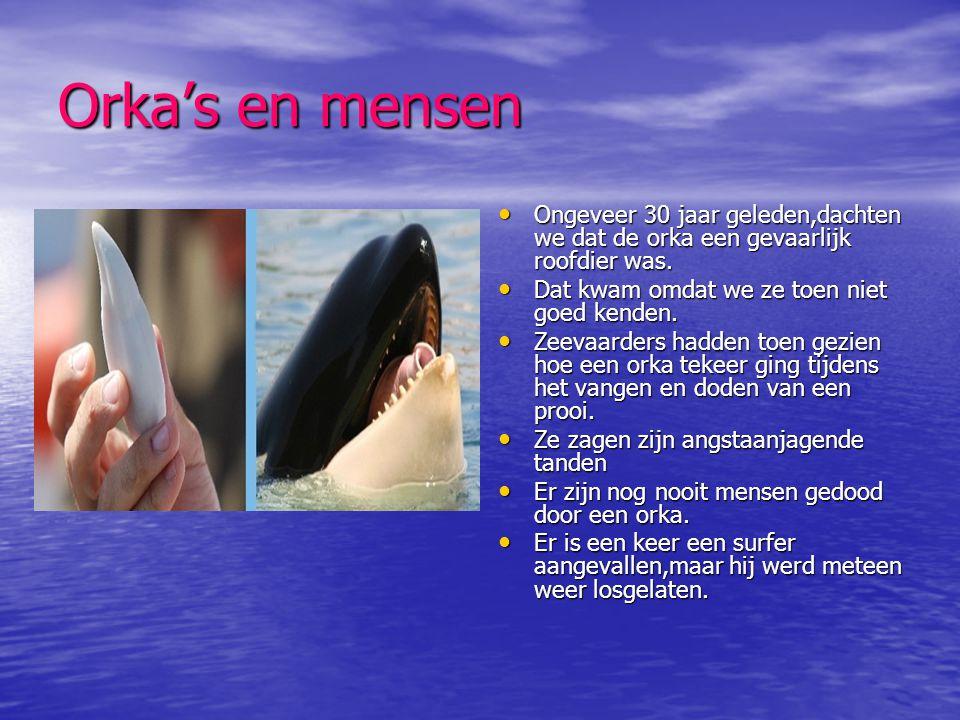 Orka's en mensen Ongeveer 30 jaar geleden,dachten we dat de orka een gevaarlijk roofdier was. Dat kwam omdat we ze toen niet goed kenden.